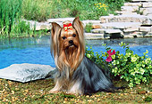 DOG 02 FA0050 01