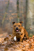 DOG 02 KH0009 01