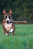 DOG 02 KH0011 01