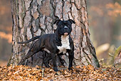 DOG 02 KH0013 01