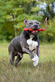 DOG 02 KH0017 01