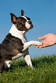 DOG 02 KH0019 01