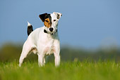 DOG 02 KH0023 01