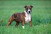 DOG 02 KH0026 01