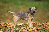 DOG 02 KH0027 01