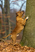 DOG 02 KH0029 01