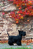 DOG 02 KH0030 01