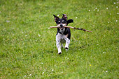 DOG 02 KH0034 01