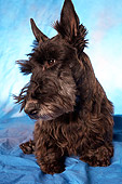 DOG 02 MQ0001 01
