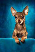 DOG 02 MQ0005 01
