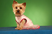 DOG 02 MQ0038 01