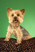 DOG 02 MQ0039 01