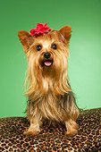 DOG 02 MQ0040 01