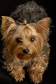 DOG 02 MR0008 01