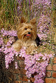 DOG 02 RC0002 01