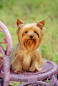 DOG 02 RC0004 01