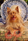 DOG 02 RC0006 01