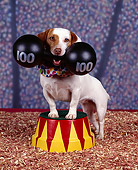 DOG 02 RK0005 05