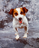 DOG 02 RK0019 10