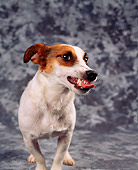 DOG 02 RK0019 23