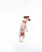 DOG 02 RK0022 01