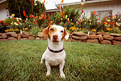 DOG 02 RK0042 15