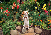DOG 02 RK0044 04