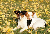 DOG 02 RK0082 02