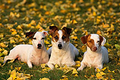 DOG 02 RK0083 08