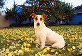 DOG 02 RK0087 06