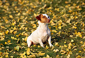 DOG 02 RK0087 17