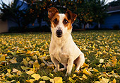 DOG 02 RK0087 24