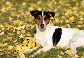 DOG 02 RK0088 04