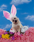 DOG 02 RK0139 08