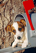 DOG 02 RK0149 05