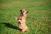 DOG 02 RK0206 02