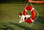 DOG 02 RK0209 13