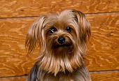 DOG 02 RK0229 02
