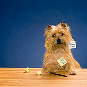DOG 02 RK0234 12