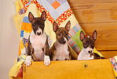DOG 02 RK0282 18