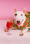 DOG 02 RK0301 02