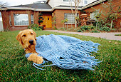 DOG 02 RK0309 02