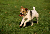 DOG 02 RK0335 01