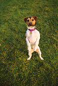 DOG 02 RK0338 02
