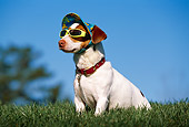 DOG 02 RK0339 18