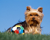 DOG 02 RK0349 02