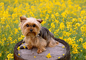 DOG 02 RK0352 04