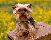 DOG 02 RK0353 03