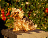 DOG 02 RK0356 01