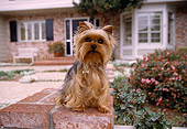 DOG 02 RK0359 04